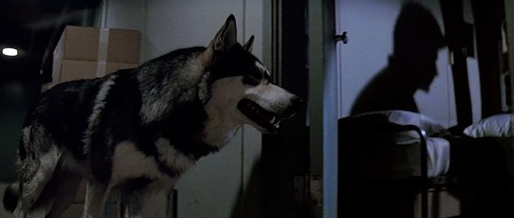 ÕÕVAKAADRITE KLASSIKA. Salapärane vari seinal ja jaamas ringi nuuskiv nakatunud koer otsimas saaki.