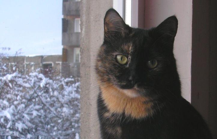 Pai juurde käivad muidugi sugestiivsed kassipildid. Seekord on fotol Mirju.